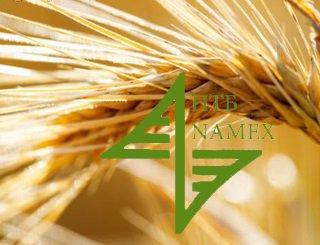 Зерно вышло на биржу