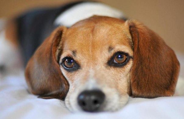 Как распознать ветеринара-мошенника?