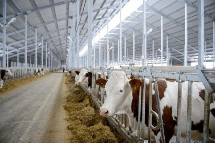 Тайский концерн построит животноводческий комплекс в Подмосковье