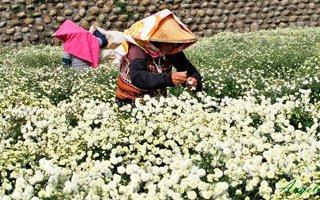 Оптовые поставки цветочной продукции