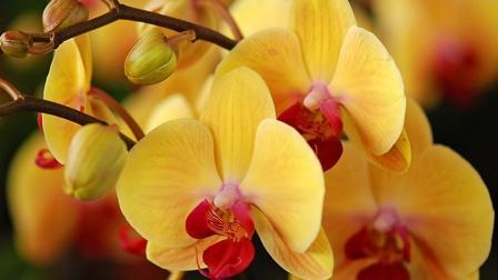 «Orchidea-shop» - царство цветов в Москве