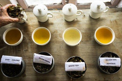 Китайцы локализуют производство чая в Подмосковье