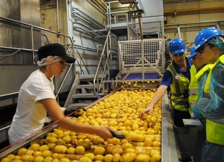 «Магнит» попросил разрешения на покупку поставщика картофеля