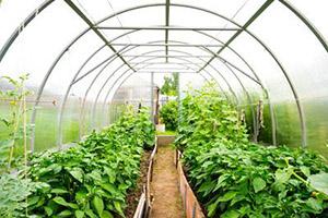 Мега Ресурс - признанный лидер по производству и реализации парников и садовых принадлежностей в Перми