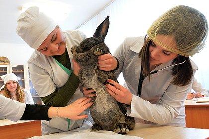«МегаФон» представил платформу для ветеринаров