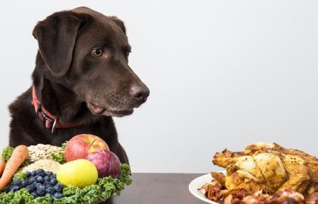 Неправильное питание и связанные с ним болезни