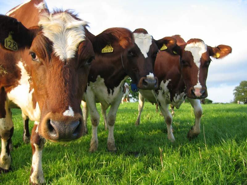 Владельцы «Major» займутся агробизнесом