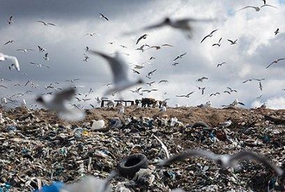 Оборудование для московских мусорозаводов обойдется «Ростеху» в 20 млрд рублей