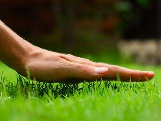 Своевременный покос травы, как избавление от ненужных проблем