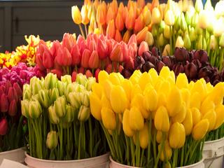Заказать тюльпаны на День рождения в любое время года
