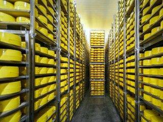 Пластиковые контейнеры для созревания сыра — выгодная замена металлических стеллажей