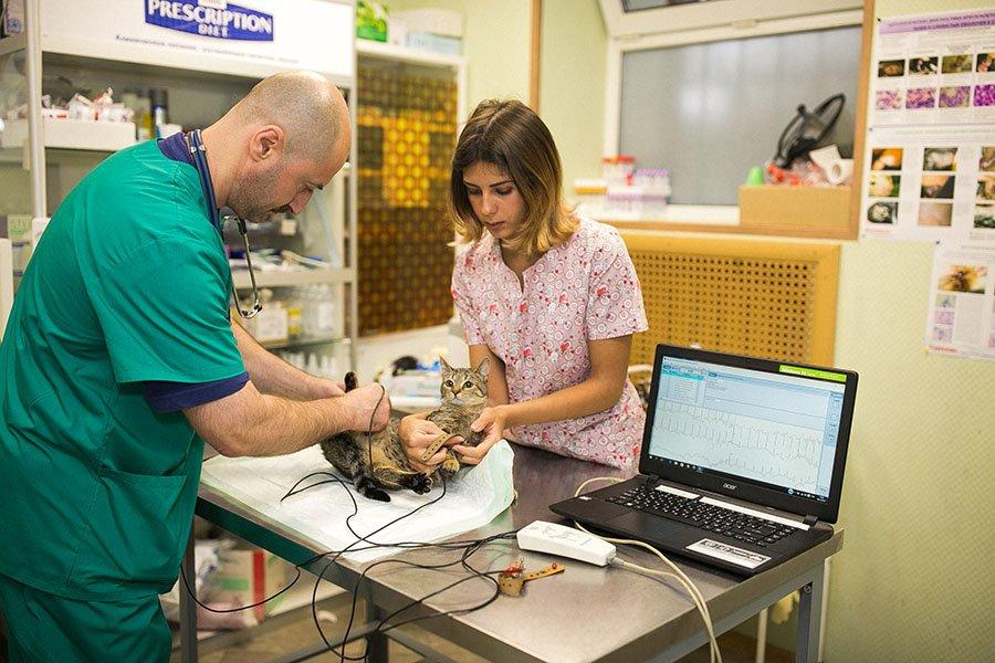«Mars» поможет лечить животных