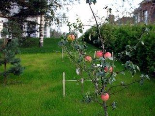 Как и где выбрать саженцы лиственных деревьев