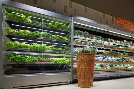 Стартап iFarm установил вертикальную ферму в магазине «Азбука вкуса»
