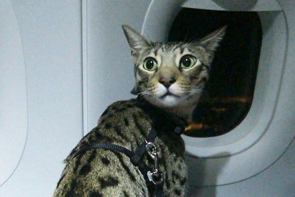 «Аэрофлот» согласился на изменение порядка перевозки животных