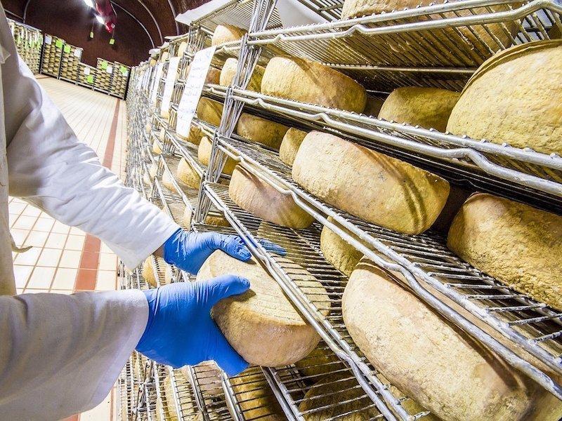 Производство сыра растет невиданными темпами