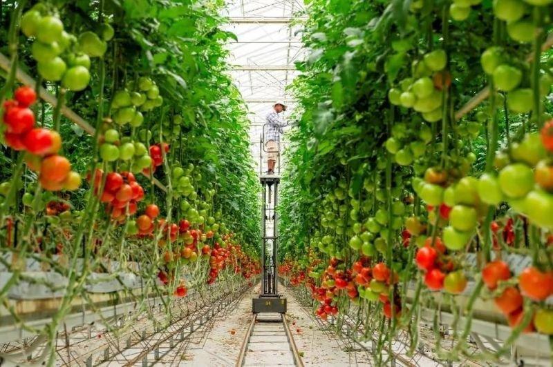 Производители овощей планируют выход на зарубежные рынки