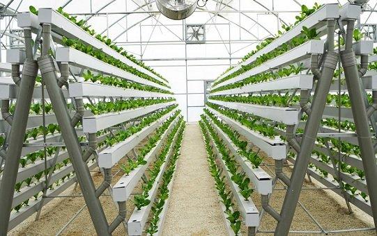 Зелень для магазинов «ВкусВилл» будут выращивать с помощью ИИ