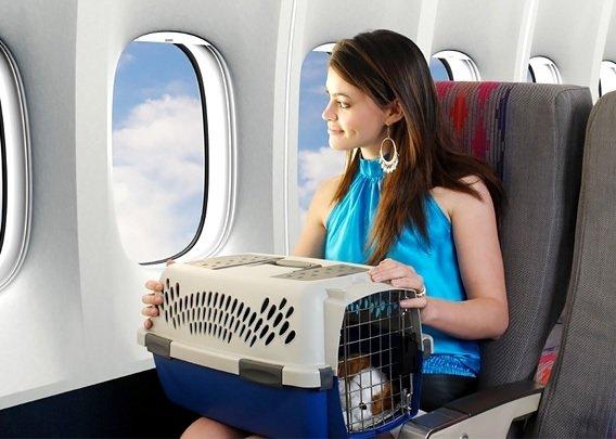 «Аэрофлот» обновил правила транспортировки животных