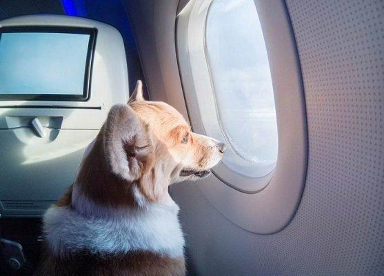 «Аэрофлот» может увеличить вес животных, допускаемых к перевозке в салоне